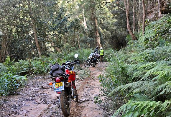 Mt Irvine to Bilpin Road bikes Peter Julian fallen trees
