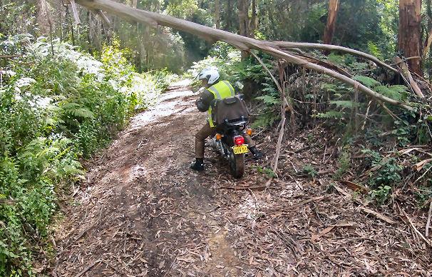 Mt Irvine to Bilpin Road fallen tree Peter