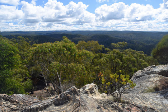 Mt Wilson viewpoint